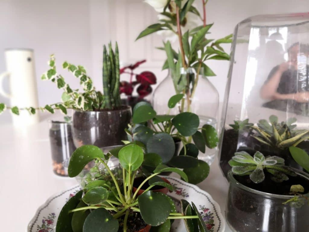 Ergebnisse des gemeinsamen Gärtners auf einem Tisch - Pflanzen im Glas
